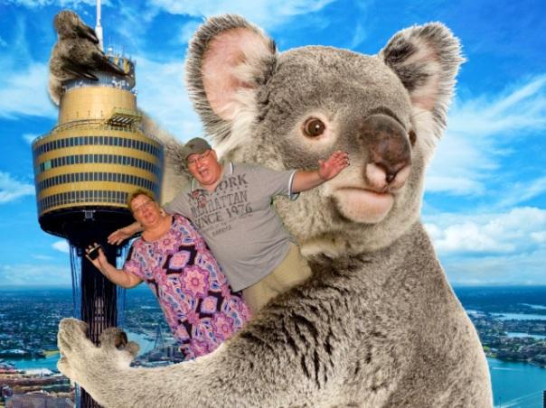 Down Under Koala